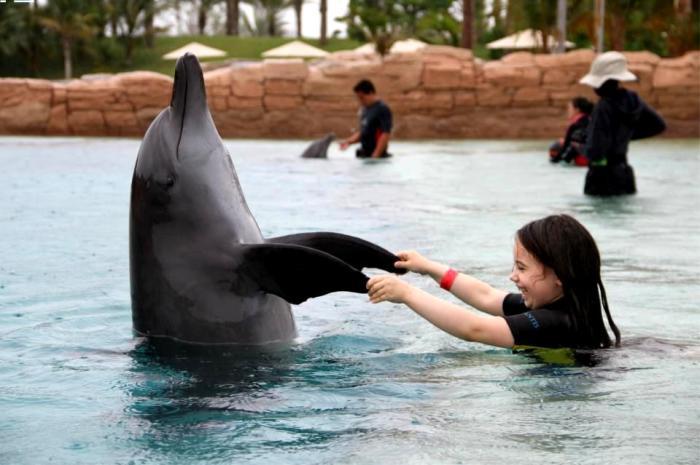 mara delfin 2