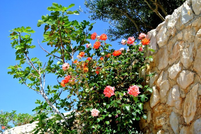 Roses Pag