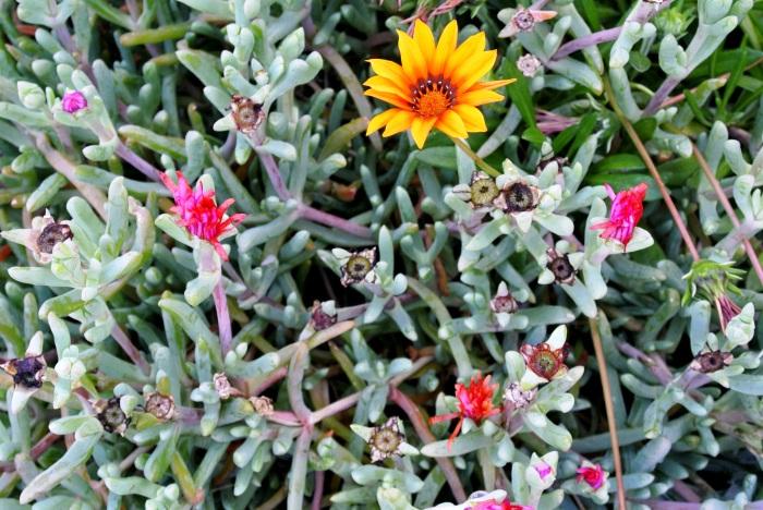 flori 4